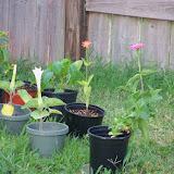 Gardening 2012 - 115_1867.JPG