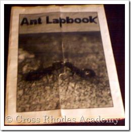 Ant Lapbook