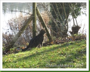 riverside moggy 5