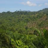 Déforestation et premières plantations de palmiers à huile (à l'est de Ranau, Sabah, Malaisie), 1er août 2011. Photo : J.-M. Gayman