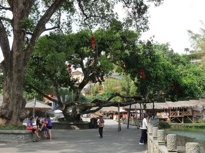 Chine .Yunnan,Menglian ,Tenchong, He shun, Chongning B - Picture%2B774.jpg