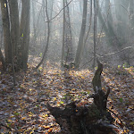 Bois de Trotigny : sous-bois