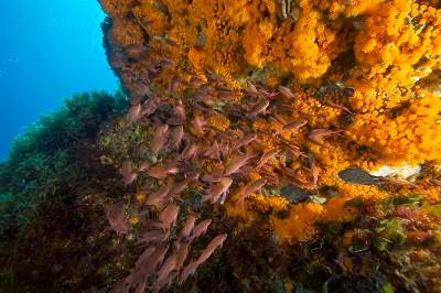 GREENPEACE: GIORNATA MONDIALE DEGLI OCEANI, ECCO I DATI SULLA PESCA CHE SALVA IL MARE