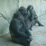 Pittsburgh Zoo Revisited - DSC05186.JPG