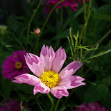Gardening 2012 - 115_2845.JPG