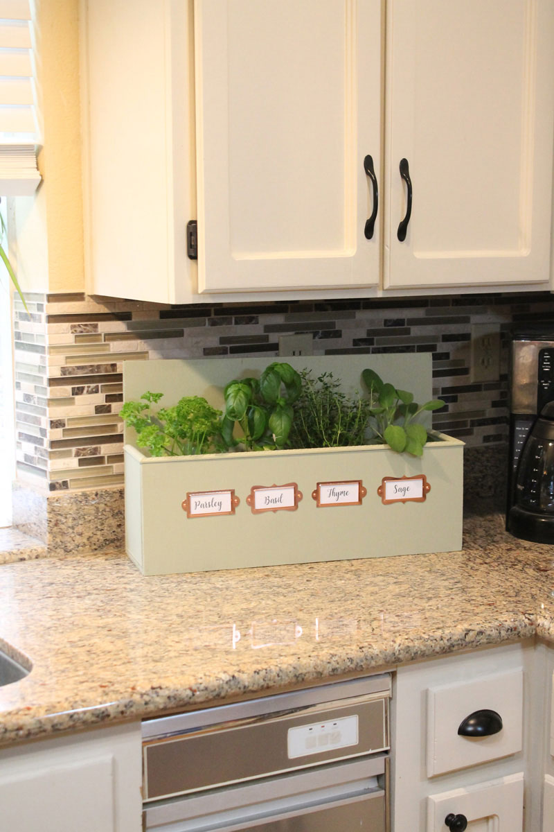 Growing herbs on kitchen counter