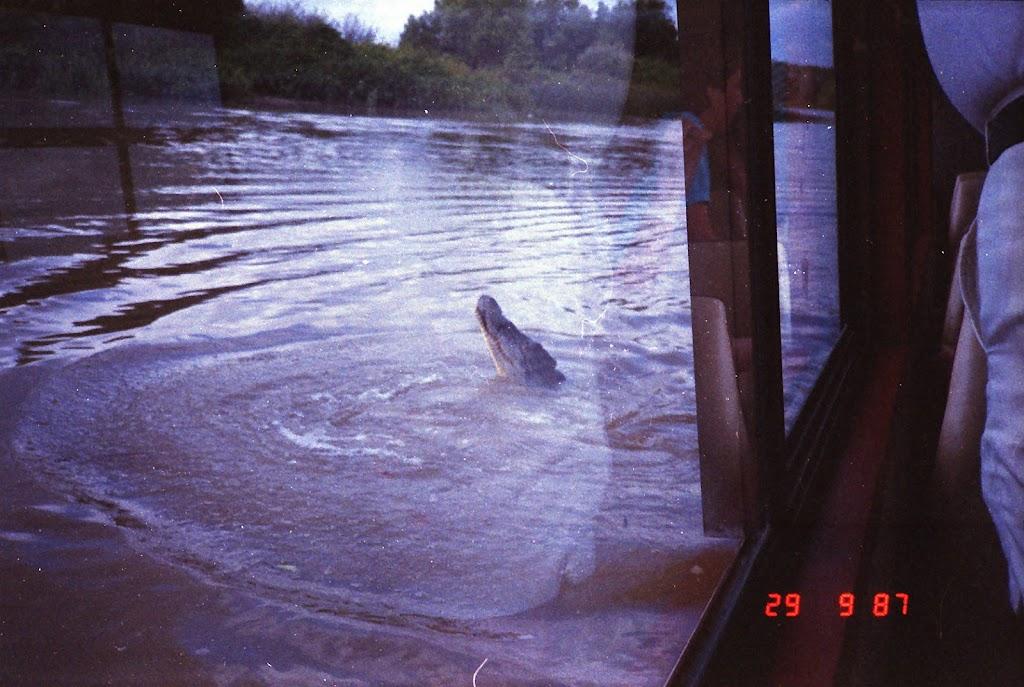 5980Adelaide River Croc Tour