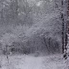 Зимняя уборка в Дендрарии 041.jpg