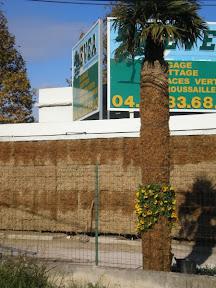 idée : pillier en sphaigne. du NOUVEAU Palmier dont le tronc à été entièrement recouvert de sphaigne
