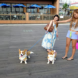 japanese girls walking their dogs in Fujisawa, Kanagawa, Japan