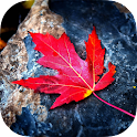 Red Leaves Live Wallpaper icon