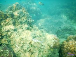 pulau pari, 23-24 mei 2015 48