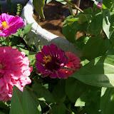 Gardening 2011 - 100_9159.JPG