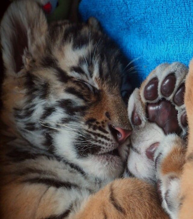 1000 Cute Animal Images part 1