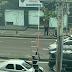 Bicho-preguiça fica preso em fios de alta tensão em avenida de Manaus