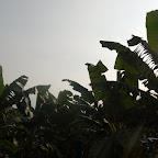 Las plantaciones de banano