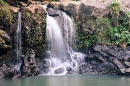 Bamboo Forest Falls