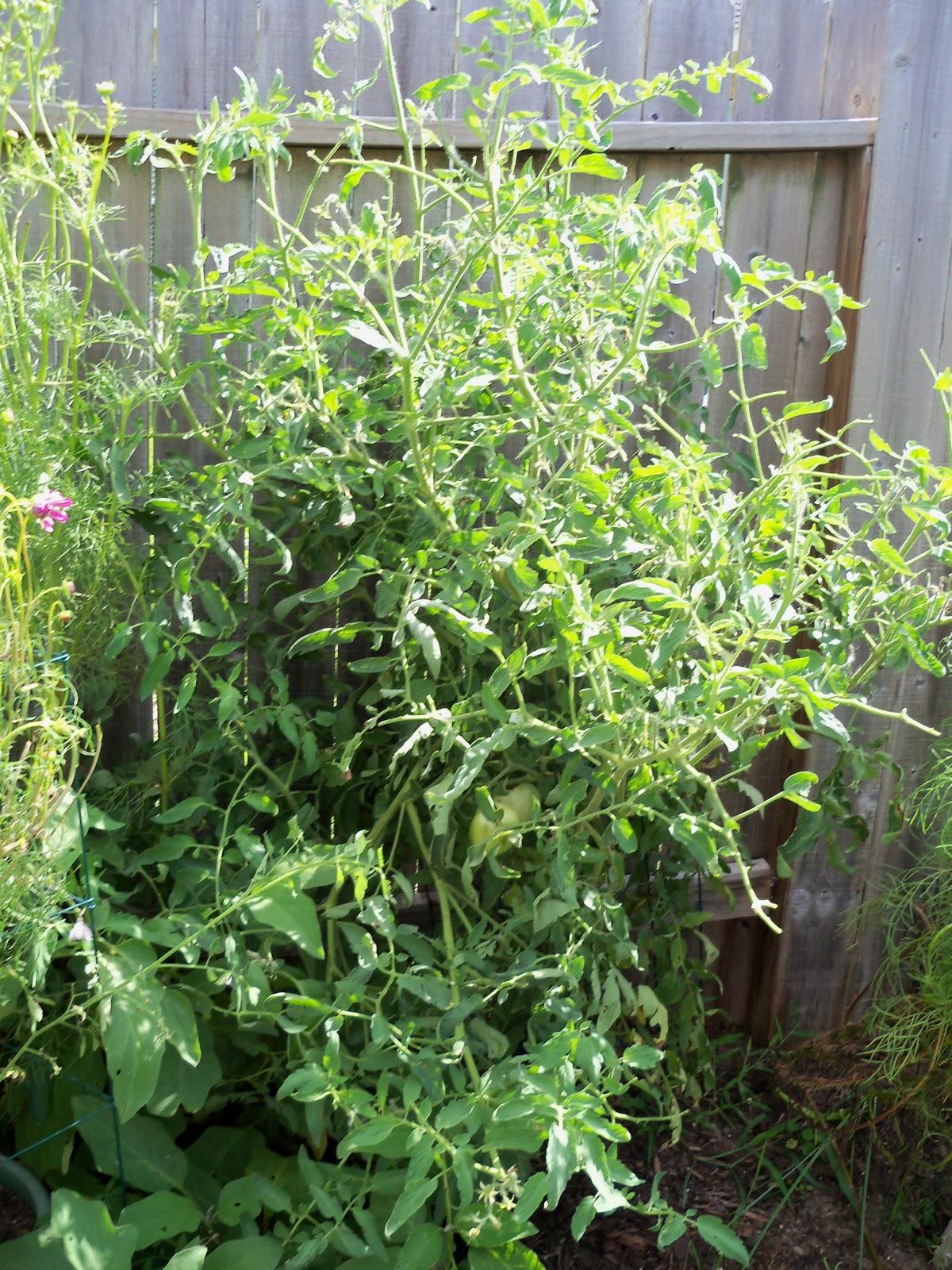 Gardening 2010, Part Three - 101_5014.JPG