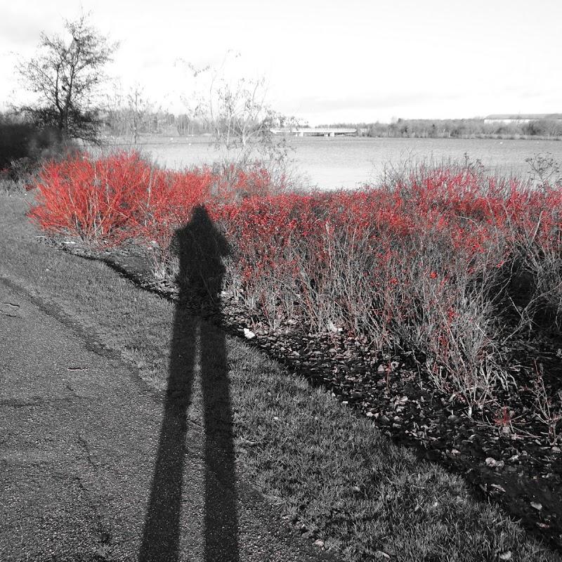 Willen_Lake_12.JPG