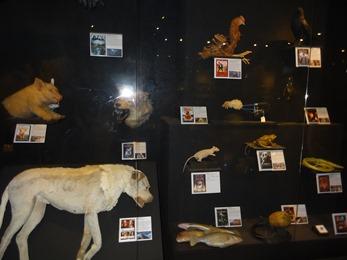 2018.08.22-100 animaux