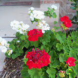 Gardening 2010, Part Two - 101_3505.JPG