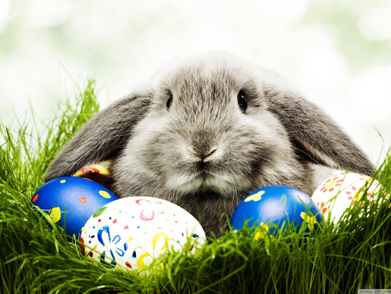 Uskrs besplatne pozadine za desktop 1600x1200 slike čestitke blagdani zec jaja free download Happy Easter