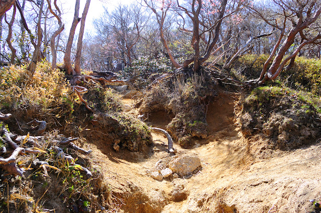 長石尾根登山道の写真
