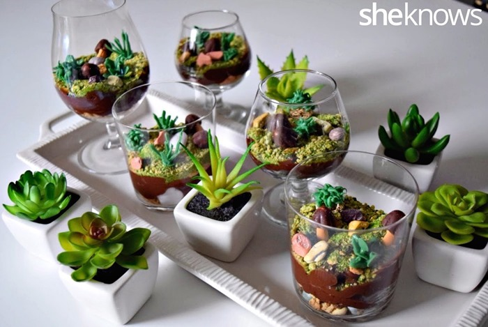 Pudding terrarium cups