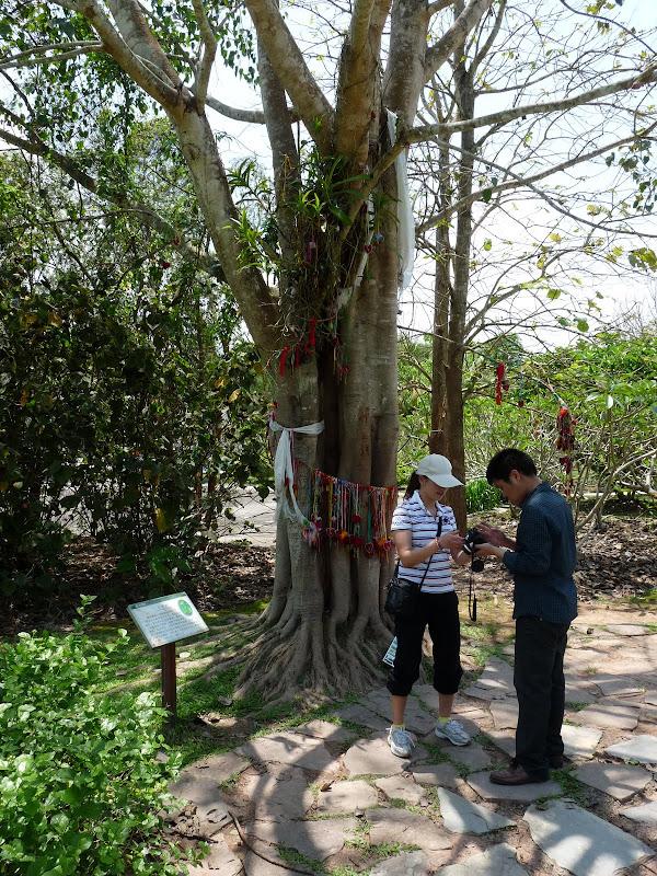 Chine .Yunnan . Lac au sud de Kunming ,Jinghong xishangbanna,+ grand jardin botanique, de Chine +j - Picture1%2B555.jpg