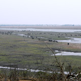 The large plain next to the Chobe with hundreds of elephants