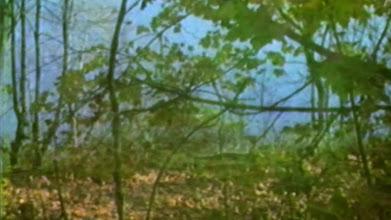 Photo: 'Dye The Water Green'  Bibio - 'The Green E.P.'  Bleep - http://smarturl.it/kfyxud Amazon - http://smarturl.it/96y2ji