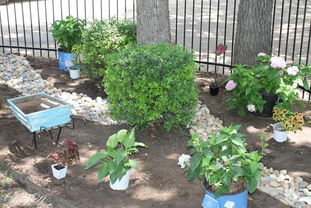 summer garden 049