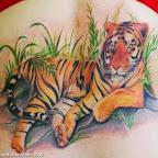 beautiful tiger - Lion Tattoos & Tiger Tattoo