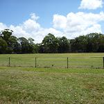 Thornleigh Oval (394973)