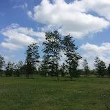 2015 - Scouting Landgoed - IMG_7895.JPG