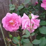 Gardening 2013 - IMG_20130330_094558.jpg