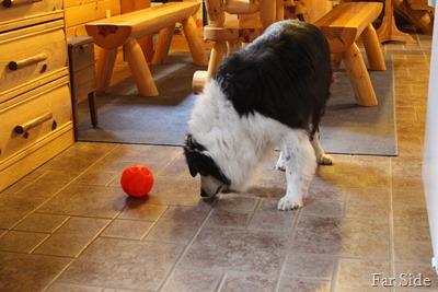 Chances Treat ball