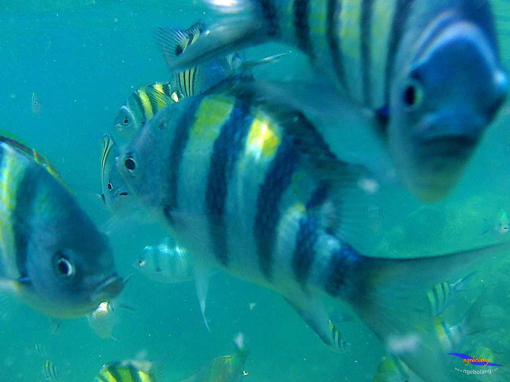 pulau harapan, 5-6 september 2015 skc 006