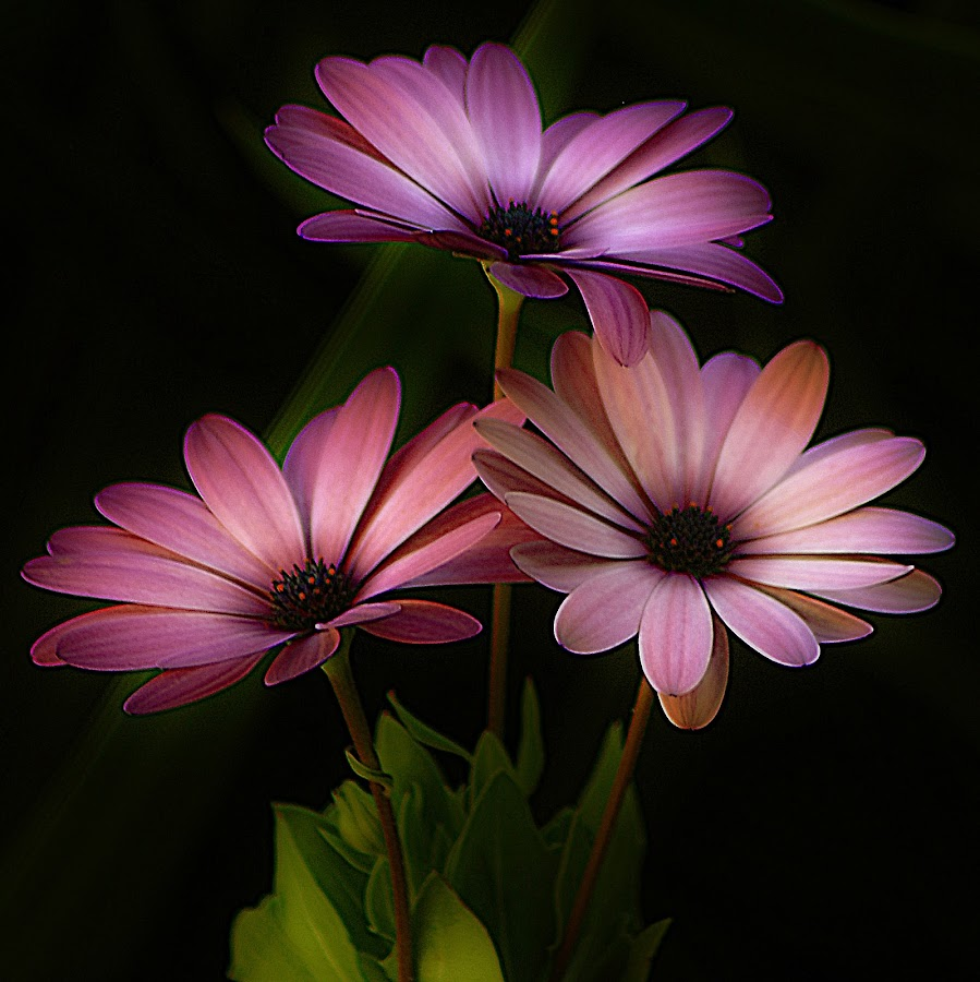 Evening Mood. by Dave  Horne - Flowers Flower Gardens