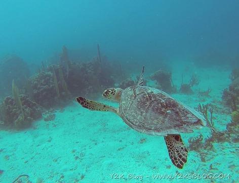 Tartaruga - Peter Island