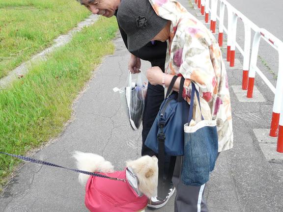 散歩中に犬も