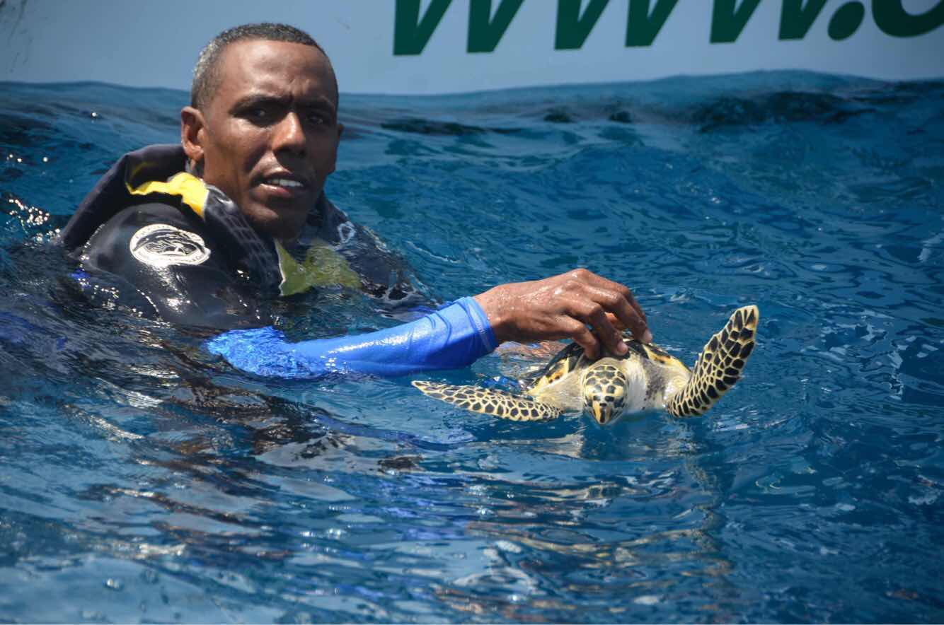 OCEAN WORLD LIBERA TORTUGAS  CAREY