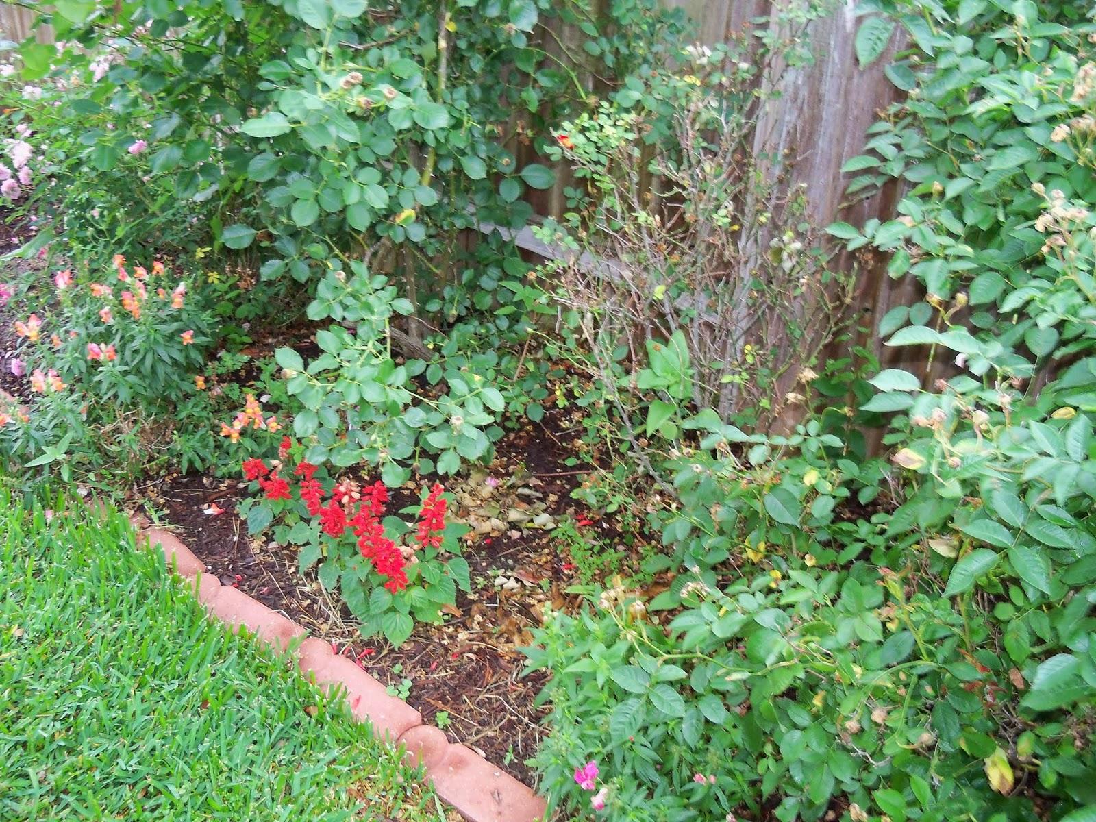 Gardening 2014 - 116_1852.JPG