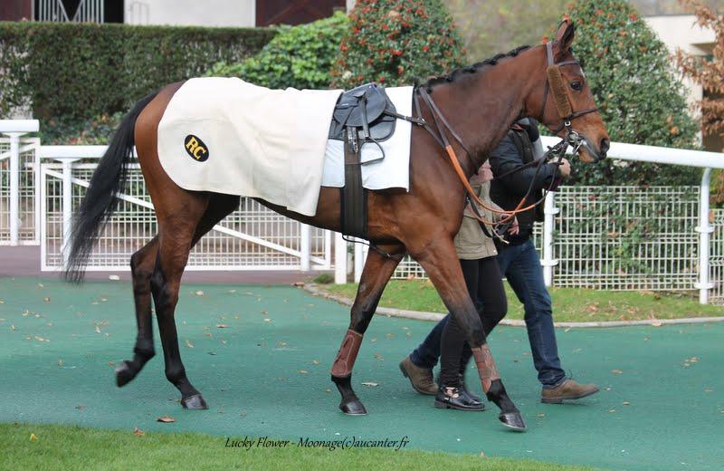 Photos Auteuil 29-11-2015 IMG_7279