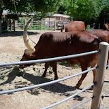 Houston Zoo - 116_8440.JPG