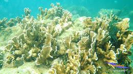 pulau harapan 8-9 nov 2014 pentax 02