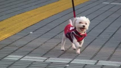 お散歩中のまるごーちゃん」