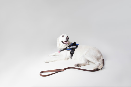 dog-training photo:dog training toys