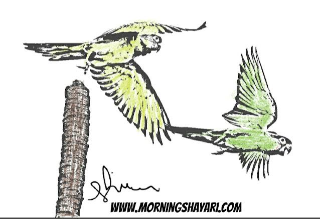 Parrot Image, Nature Photography, Photos, Bird images, drawing parrot, Flying parrot, Speaking parrot