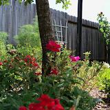 Gardening 2010, Part Three - 101_3831.JPG